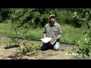 Planning an Organic Vegetable Garden