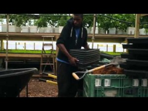 How 3 Acres Produce Over One Million Pounds of Organic Food for Urban Dwellers